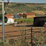Foto Caballos y burros en Corpa 1