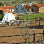 Foto Caballos y burros en Corpa 2