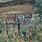 Foto Caballos y burros en Corpa 4