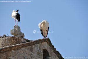 Foto Cigüeñas en Fresnedillas 6