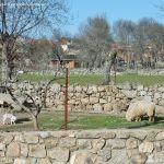 Foto Ovejas en Fresnedillas de la Oliva 4