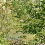 Foto Río Tajo en Fuentidueña 5