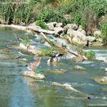 Foto Río Tajo en Fuentidueña 9