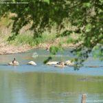 Foto Río Tajo en Fuentidueña 11