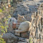 Foto Gato en El Cuadrón 1