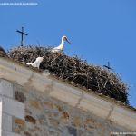 Foto Cigüeñas en Gascones 2
