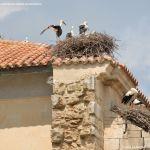 Foto Cigüeñas en Guadalix de la Sierra 7