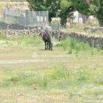 Foto Caballos en Guadalix de la Sierra 1