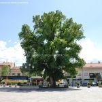 Foto Olma de Guadarrama 10