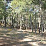 Foto Bosque La Jarosa 6