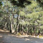 Foto Bosque La Jarosa 7