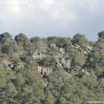 Foto Bosque La Jarosa 11