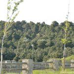 Foto Bosque La Jarosa 12