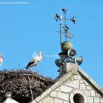 Foto Cigüeñas en Hoyo de Manzanares 2