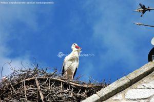 Foto Cigüeñas en Hoyo de Manzanares 6