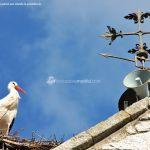 Foto Cigüeñas en Hoyo de Manzanares 7