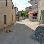 Foto Perros en Navas de Buitrago 1