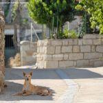 Foto Perros en Navas de Buitrago 2
