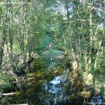 Foto Puente Romano en Sieteiglesias 1