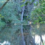 Foto Puente Romano en Sieteiglesias 40