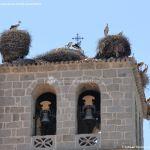 Foto Cigüeñas en Manzanares el Real 3