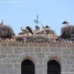 Foto Cigüeñas en Manzanares el Real 5