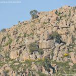 Foto Parque Regional de la Pedriza 70