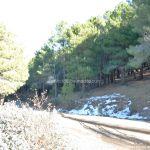Foto Parque Regional de la Pedriza 82