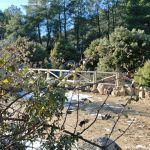 Foto Parque Regional de la Pedriza 144