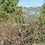 Foto Parque Regional de la Pedriza 148