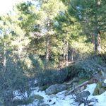 Foto Parque Regional de la Pedriza 175