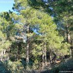 Foto Parque Regional de la Pedriza 179
