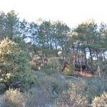 Foto Parque Regional de la Pedriza 182