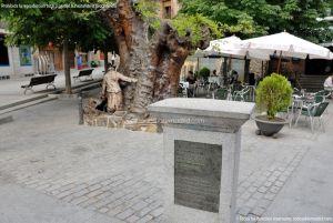 Foto Álamo Viejo en Miraflores de la Sierra 2