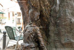Foto Álamo Viejo en Miraflores de la Sierra 17