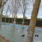 Foto Patos en Moraleja de Enmedio 11