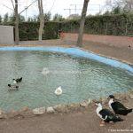 Foto Patos en Moraleja de Enmedio 12