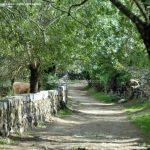 Foto Camino al Molino en Navalafuente 15