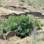 Foto Cochiqueras en Patones 12