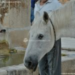 Foto Caballo en Pedrezuela 5