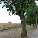Foto Paseo de la Ermita de Pezuela de las Torres 4