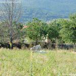 Foto Ganado vacuno en Pinilla del Valle 5