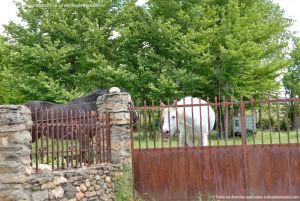 Foto Caballos en Prádena del Rincón 10