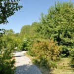 Foto Arboreto Giner de los Ríos 7