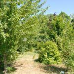 Foto Arboreto Giner de los Ríos 8