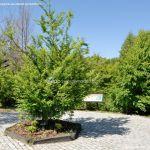 Foto Arboreto Giner de los Ríos 10