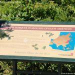 Foto Arboreto Giner de los Ríos 11