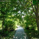 Foto Arboreto Giner de los Ríos 14