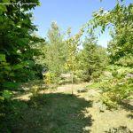 Foto Arboreto Giner de los Ríos 17