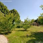 Foto Arboreto Giner de los Ríos 18
